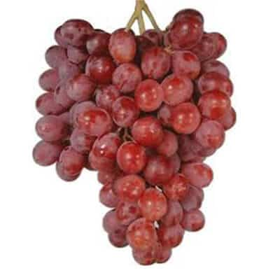 how to grow flame seedless grapes
